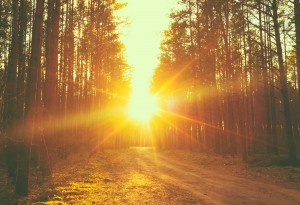 Timberline-Forest-Road-Sunset-Sunbeams-edited